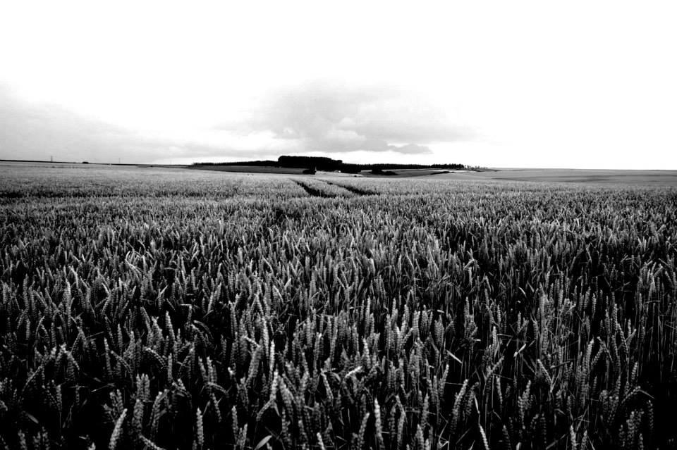 flanders fields kuukskes
