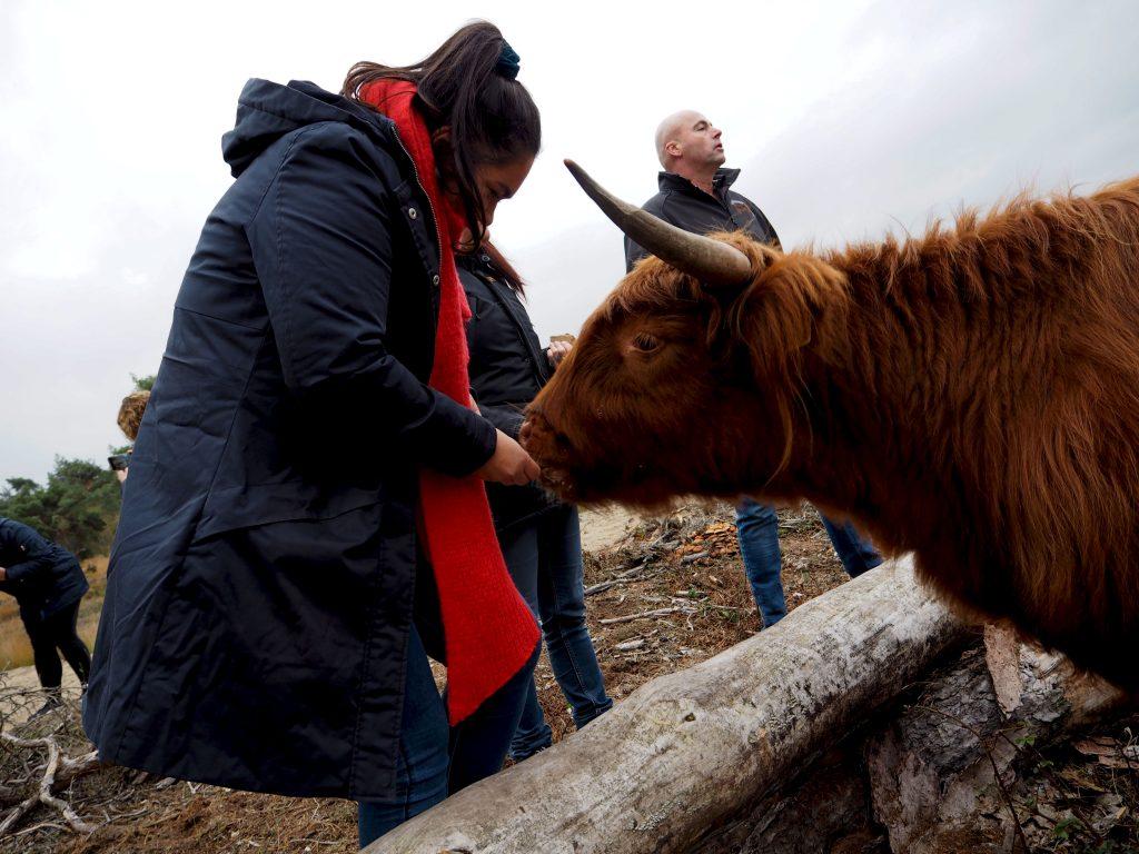 Crole Natuurrund: goed vlees van gelukkige koeien