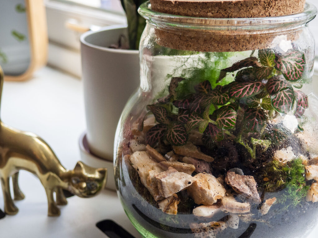 Grow-your-own terrarium. Groene vingers voor beginners met Plant Rebelz